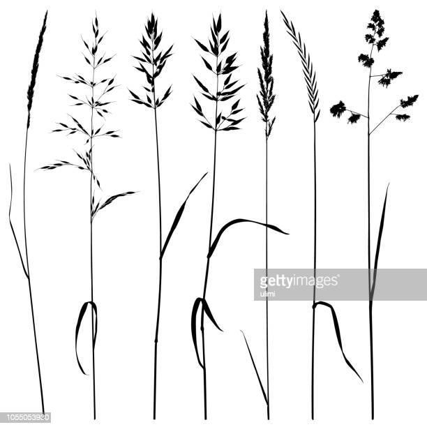 illustrazioni stock, clip art, cartoni animati e icone di tendenza di sagome vegetali, erba di prato - grano graminacee