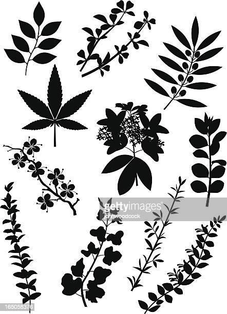plant silhouettes - arrowwood stock illustrations, clip art, cartoons, & icons