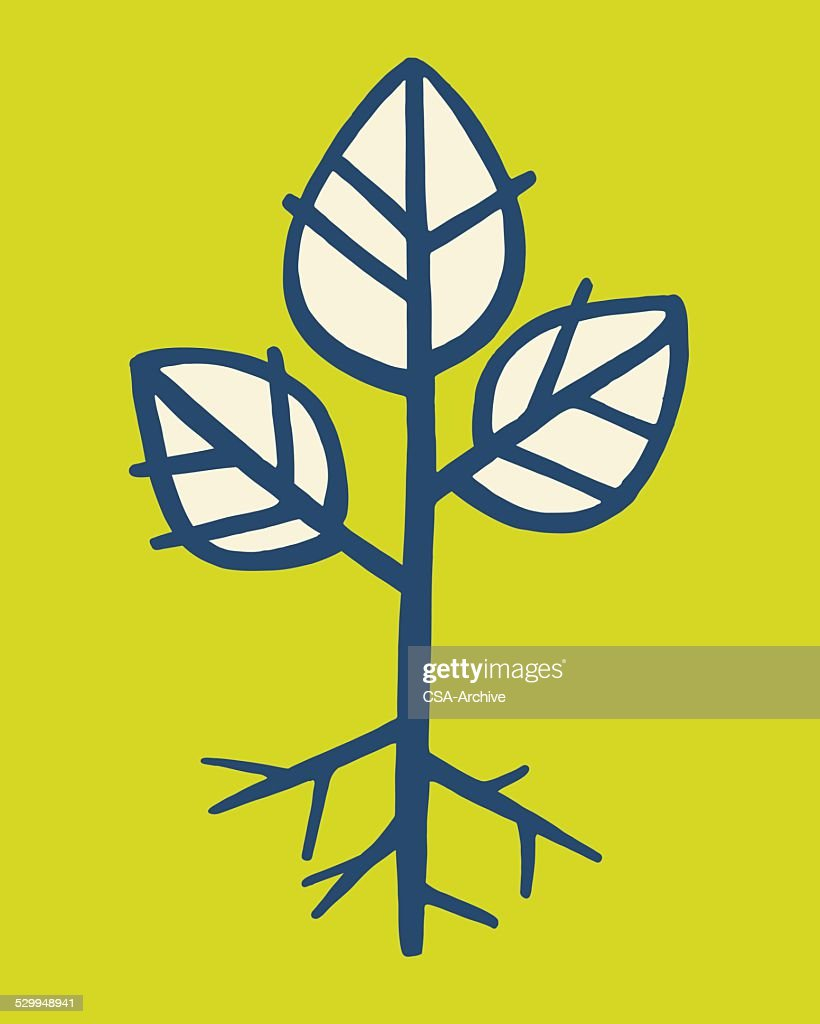 Plant Sprout : stock illustration