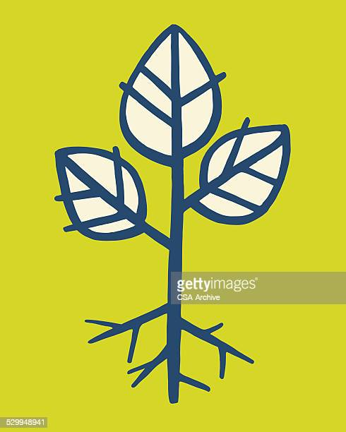 plant sprout - root stock illustrations, clip art, cartoons, & icons