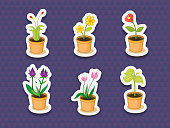 Plant stickers