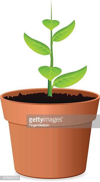 ilustrações de stock, clip art, desenhos animados e ícones de planta de - planta de vaso