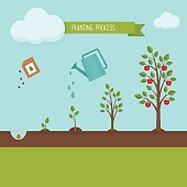 Planting tree process infographic.