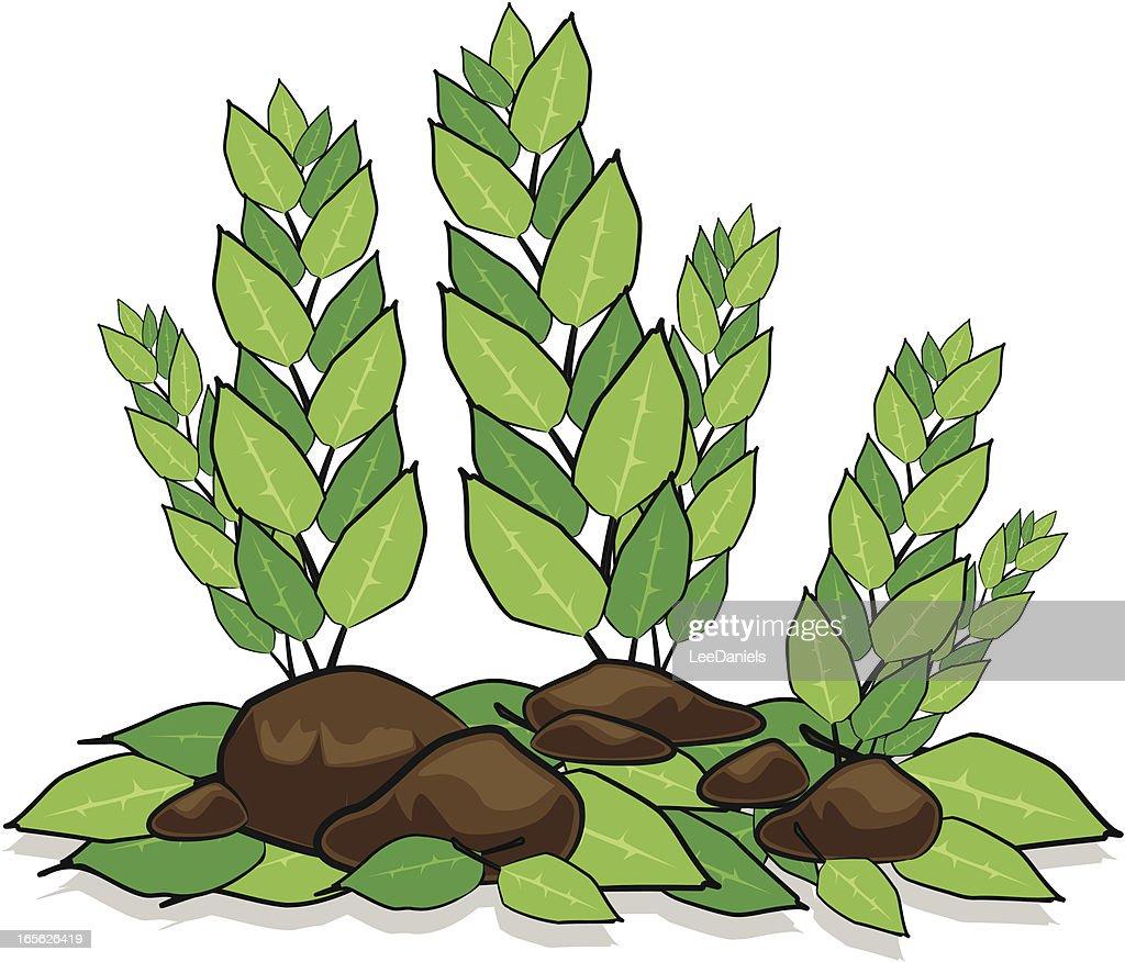 Plants And Rocks Cartoon Vector Art