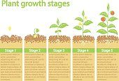 Plants growing infographic.