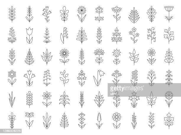 illustrations, cliparts, dessins animés et icônes de ensemble d'icônes de plantes - brin muguet