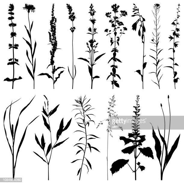 植物シルエット、ベクター イメージ