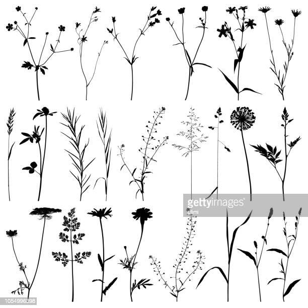 plants silhouette, vector images - blade of grass stock illustrations