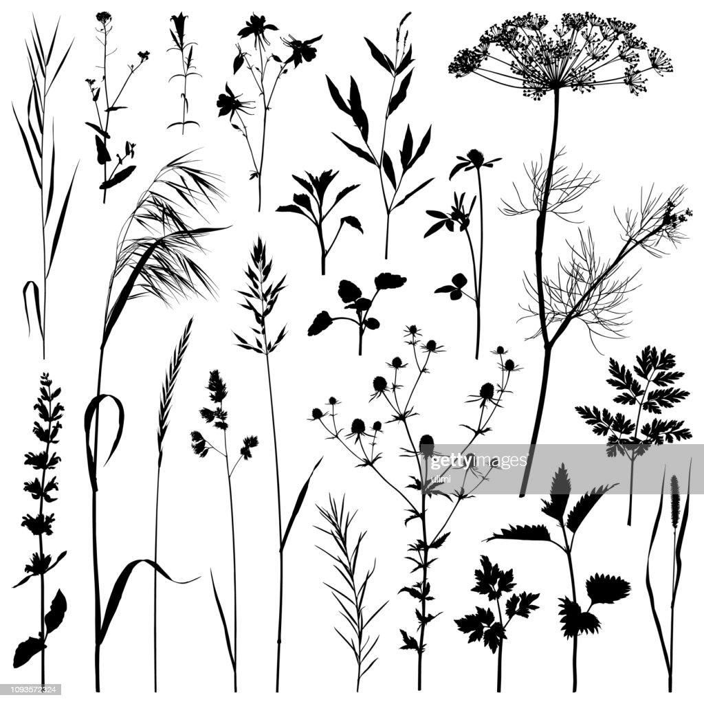 植物シルエット、ベクター イメージ : ストックイラストレーション
