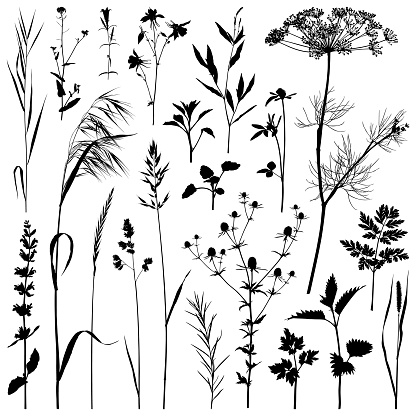 Plants silhouette, vector images - gettyimageskorea