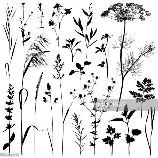 plants silhouette, vector images - flower stock illustrations