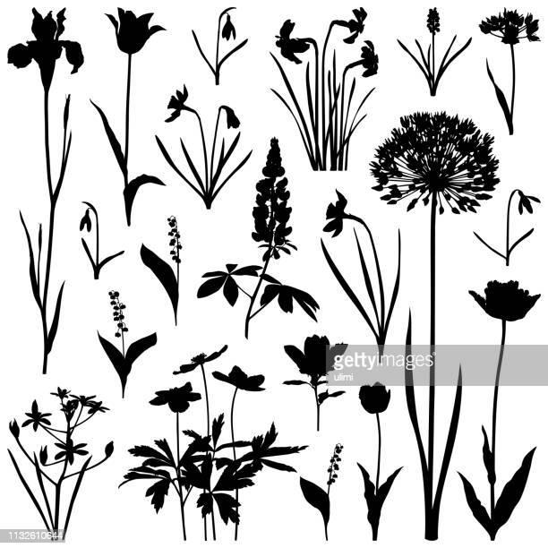 plants silhouettes, spring flowers - allium flower stock illustrations