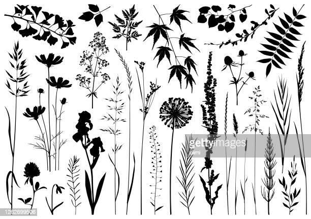 plants silhouettes - stem topic stock illustrations