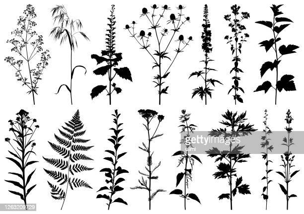 plants silhouettes - wildflower stock illustrations