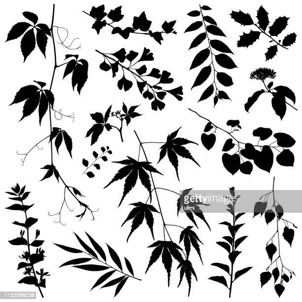 stockillustraties, clipart, cartoons en iconen met planten silhouetten, vectorafbeeldingen - tak plantdeel
