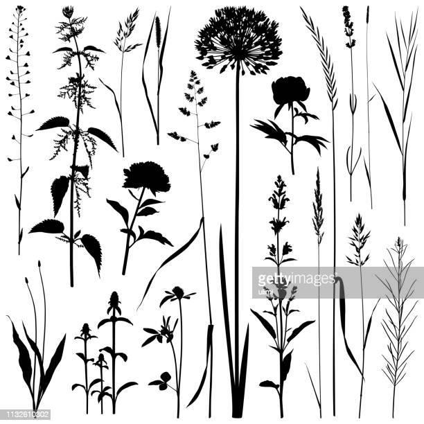 plants silhouettes, vector images - allium flower stock illustrations