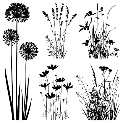 Plants silhouettes, vector images - gettyimageskorea