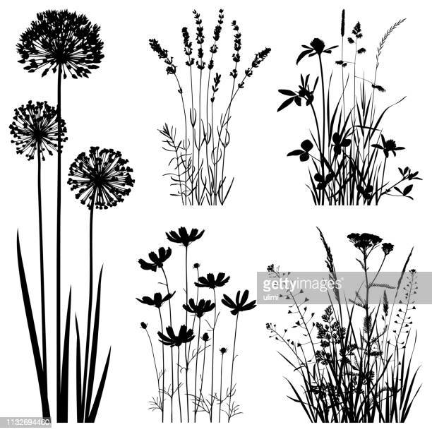 plants silhouettes, vector images - flower head stock illustrations