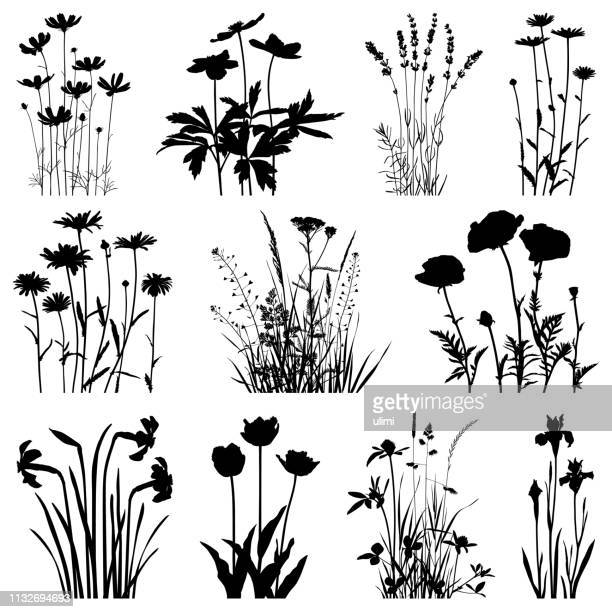 plants silhouettes, vector images - flower stock illustrations