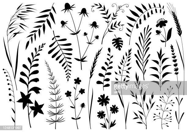 ilustraciones, imágenes clip art, dibujos animados e iconos de stock de plantas - grano planta