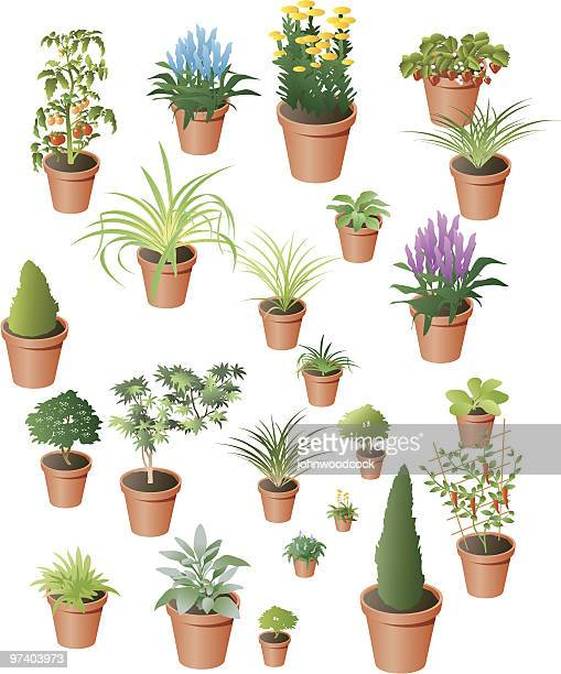 plants - coniferous tree stock illustrations, clip art, cartoons, & icons