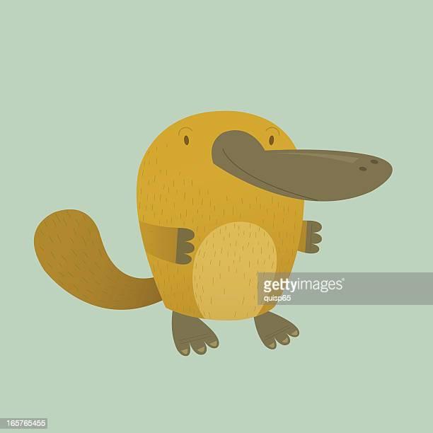 platypus - duck billed platypus stock illustrations