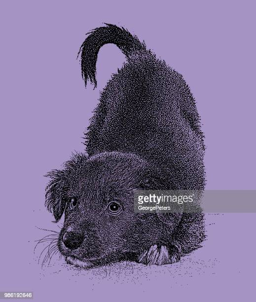 playful australian shepherd mixed breed puppy hoping to be adopted - naughty america stock illustrations, clip art, cartoons, & icons