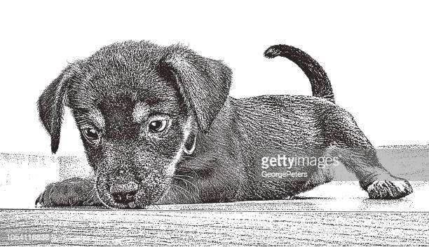 Playful Puppy.