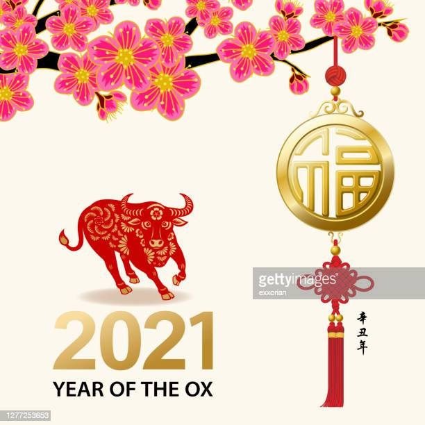plum blossom of ox year 2021 - year of the ox stock illustrations