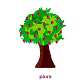 Plum tree. Design element flat style object isolated