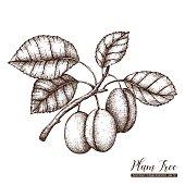 plum tree illustartion