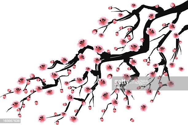 ilustrações de stock, clip art, desenhos animados e ícones de ameixa - arcaico