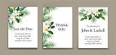 Plumeria flower on cards set