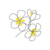 Plumeria flowers bunch