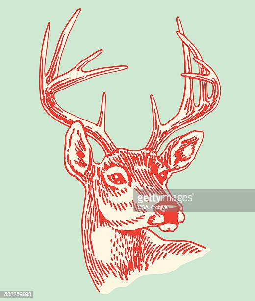 Deer Stock Illustrations And Cartoons