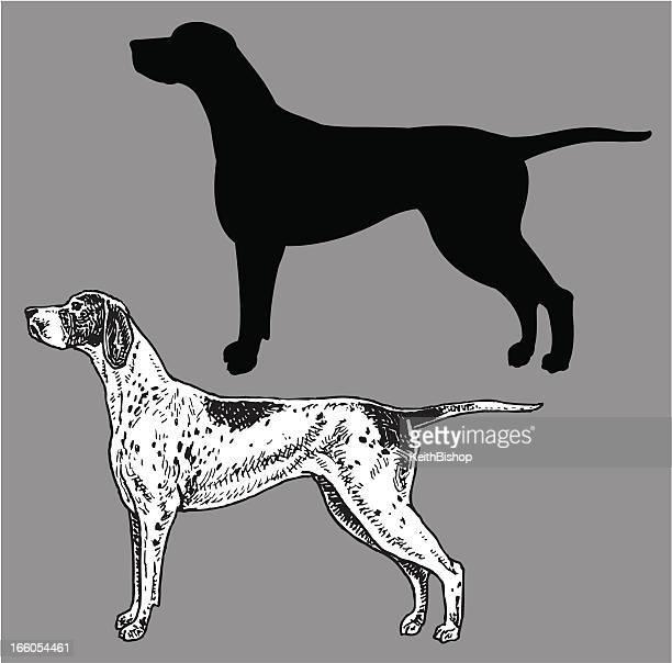 pointer - dog, domestic pet - pointer dog stock illustrations
