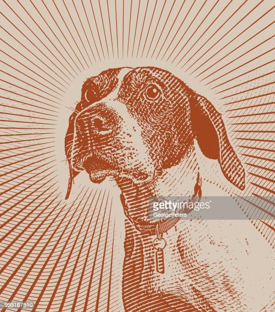 pointer dog hoping to be adopted - pointer dog stock illustrations