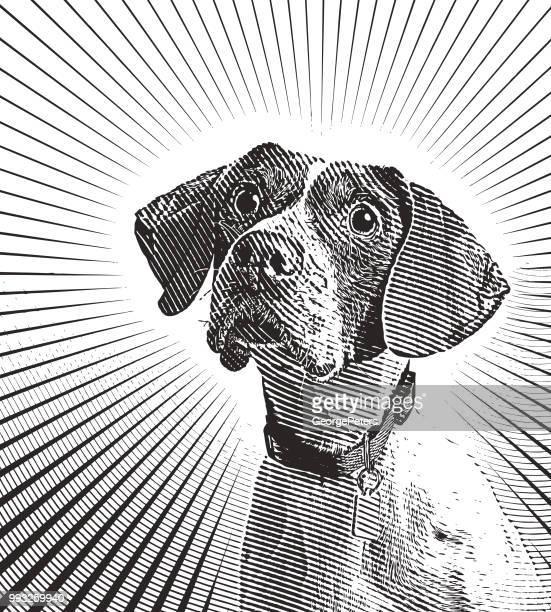 Pointer Hund angenommen werden in der Hoffnung