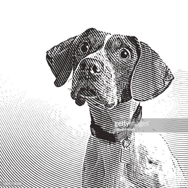 採用されることを期待して動物の避難所でのポインター犬