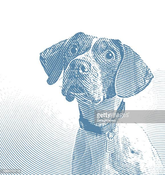 pointer dog in animal shelter hoping to be adopted - cute stock illustrations