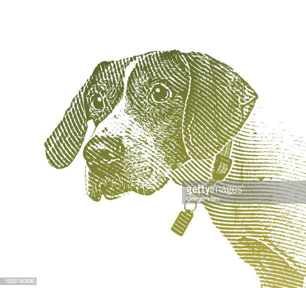 pointer dog in animal shelter hoping to be adopted - desaturated stock illustrations, clip art, cartoons, & icons