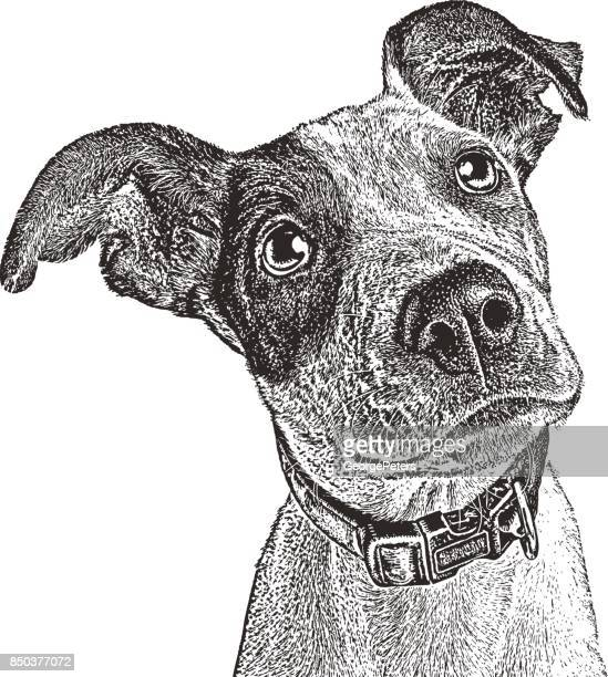 pointer mix puppy rescued from houston after hurricane harvey. - dog stock illustrations