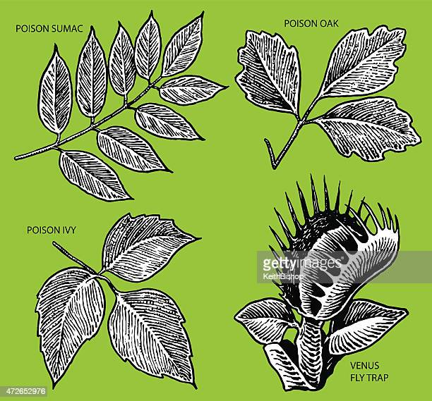 poison ivy, venus fly trap - venus flytrap stock illustrations, clip art, cartoons, & icons