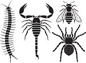 Poisonous insects set.