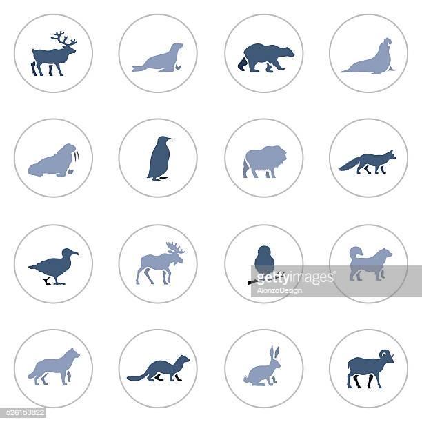 illustrations, cliparts, dessins animés et icônes de ensemble d'icônes animaux polaires - ours polaire