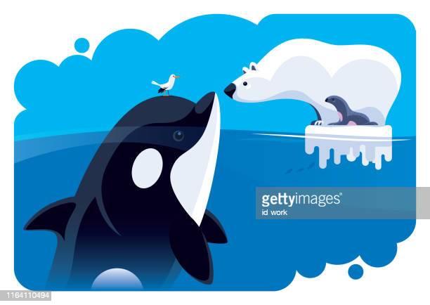 illustrazioni stock, clip art, cartoni animati e icone di tendenza di orso polare che comunica con orca - clima polare