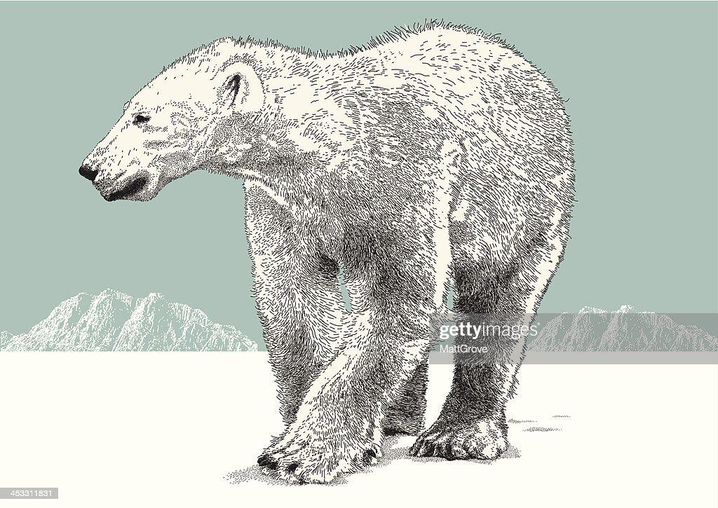 Illustrazioni stock clip art cartoni animati e icone di orso