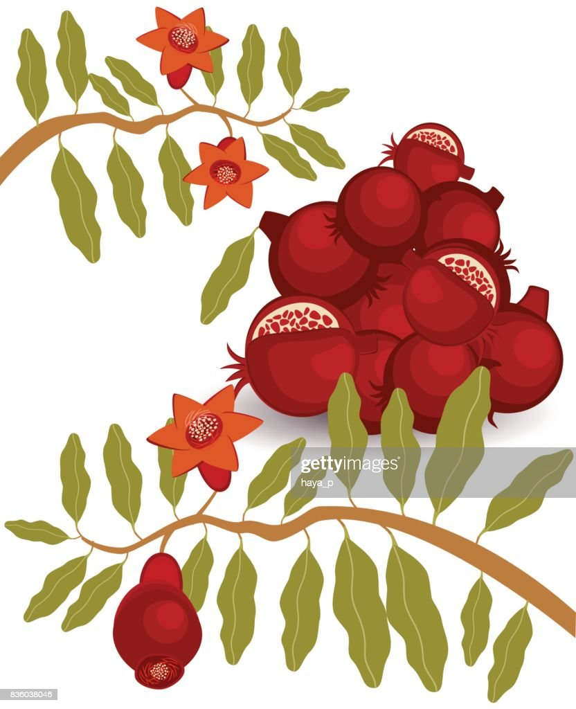 Pomegranate Branch Jewish New Year Symbol Vector Art Getty Images