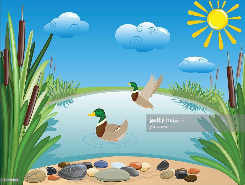 Pond : stock illustration