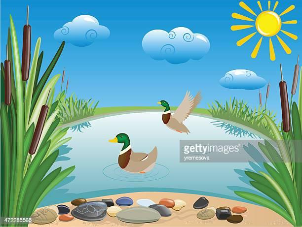 pond - duck stock illustrations, clip art, cartoons, & icons